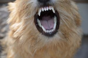 Beanie teeth