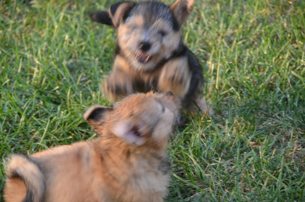 Can You Teach a Puppy To Avoid Future Conflicts? You Bet! (6/6)